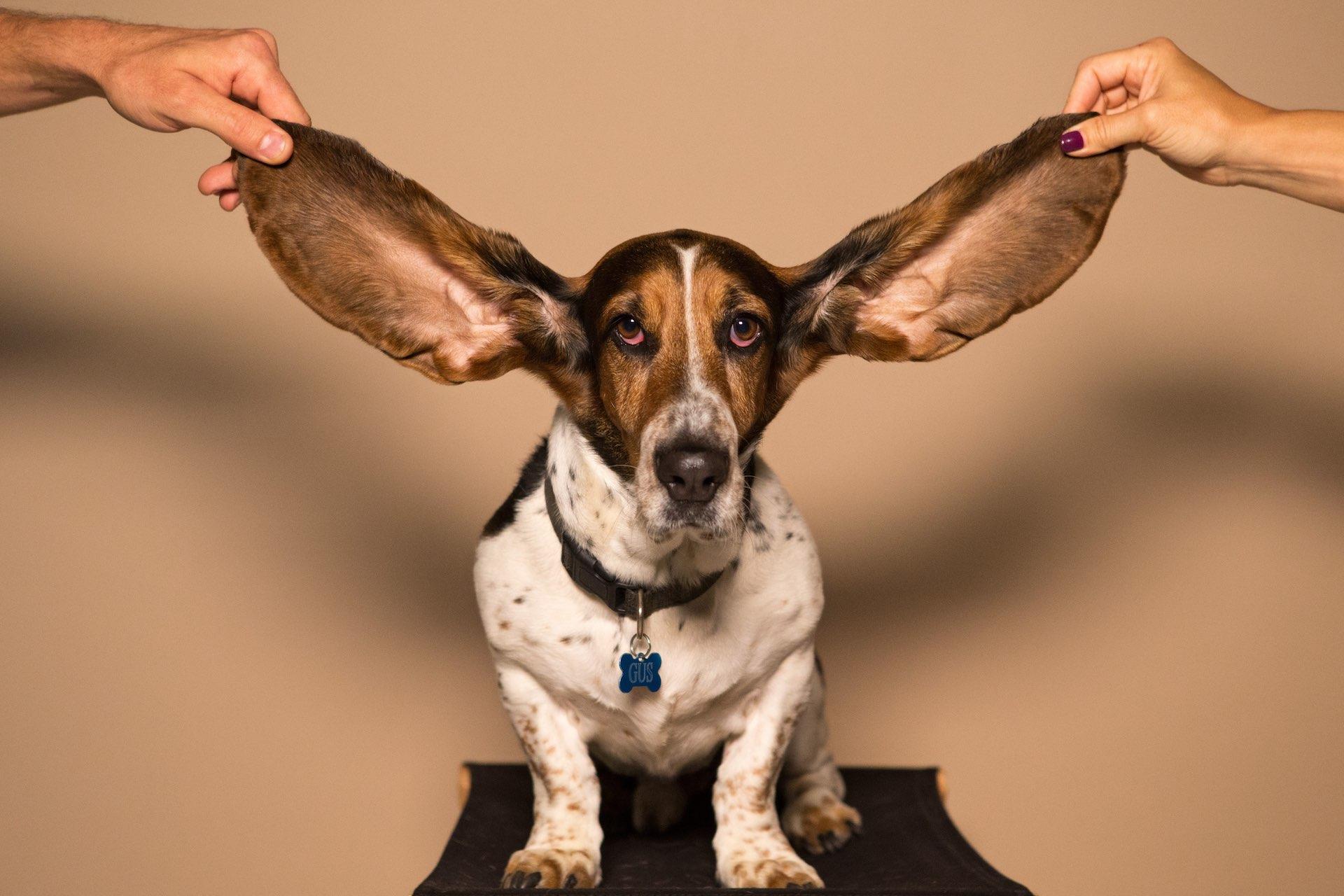 Free Online Hearing Test - NY Otolaryngology Group